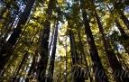 ©family trees